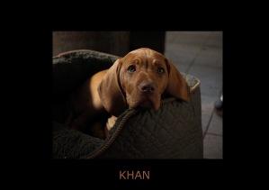 Khan Pic 1
